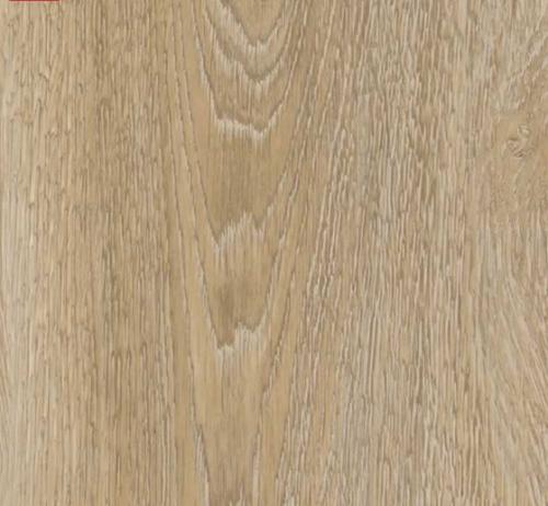 resilient-50230-scarlet-oak