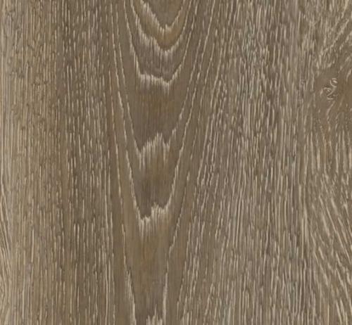 resilient-50860-scarlet-oak